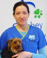 how to become a veterinary nurse ireland